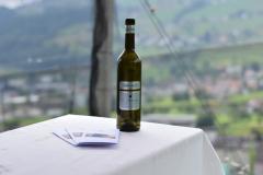 Chardonnay im Rebberg