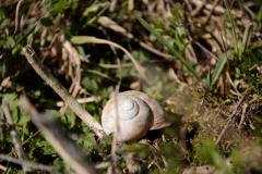 Artenvielfalt-im-Rebberg