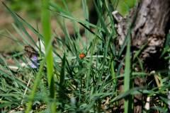 Artenvielfalt im Rebberg