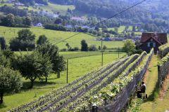 Weinlage Thal Halde
